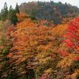 中津谷渓谷の紅葉11
