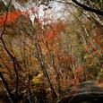 中津谷渓谷の紅葉7