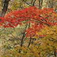 中津谷渓谷の紅葉9