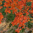 中津谷渓谷の紅葉6