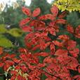 中津谷渓谷の紅葉1