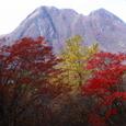 くじゅう 紅葉と三俣山