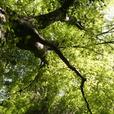 新緑に陽光映える