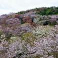 08 草山の春景色