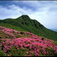 九重 大船山とミヤマキリシマ