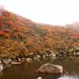 九重 御池の紅葉