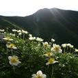 チングルマと三俣蓮華岳